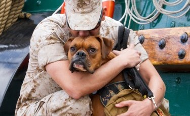 Midas, 2014 Military Pet of the Year and Dogs on Deployment Mascot