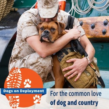 Midas, Military Pet of the Year & Dogs on Deployment Mascot