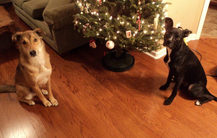 Moody and Radar at Christmas