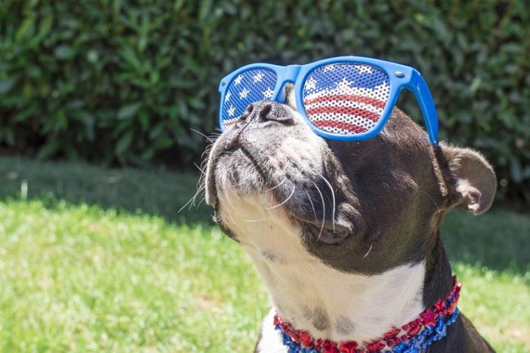 Cute dog wearing patriotic sunglasses and collar.